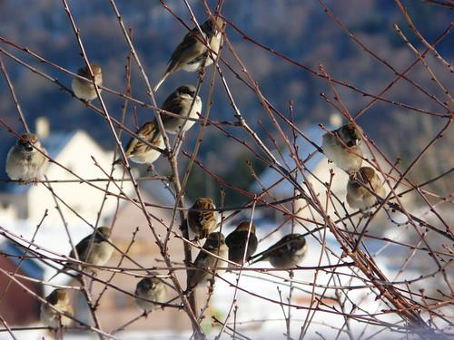 Dans le cerisier au fond du jardin in the cherry tree 1 for Jardin 4 moineaux