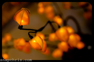 Orange flower lights | by tibchris