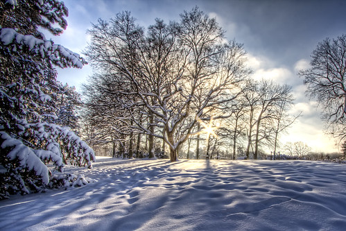 Winter Morning Hide & Seek (Explored) | by Pdiddy3g