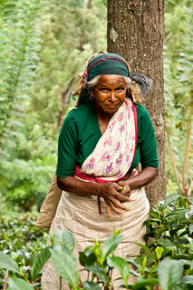 Sri Lankan tea picker | by Umbreen Hafeez