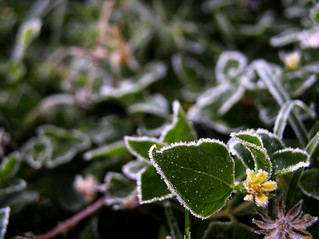 Frosty | by Jason A. Samfield