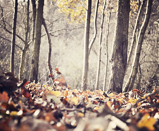 The forest floor {Explored fp} | by Paisley patches