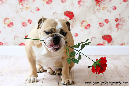 Will You Be My Valentine? | by Cynthia Jill Photography