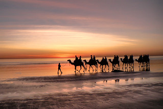 Cable Beach Camels | by Dedi Sharabi
