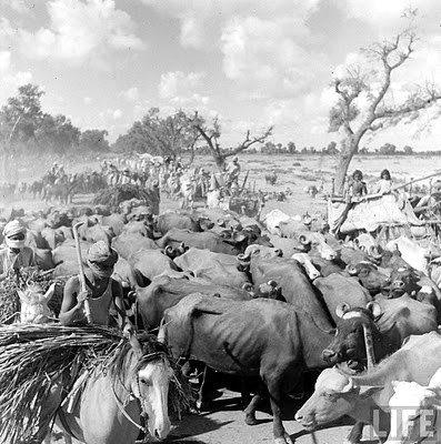 Punjab Mass migration 1947 | by Tahir Iqbal (Over 48,80,000 Visits, Thank You)