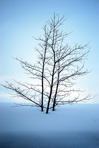 Minimalist Trees | by dcclark