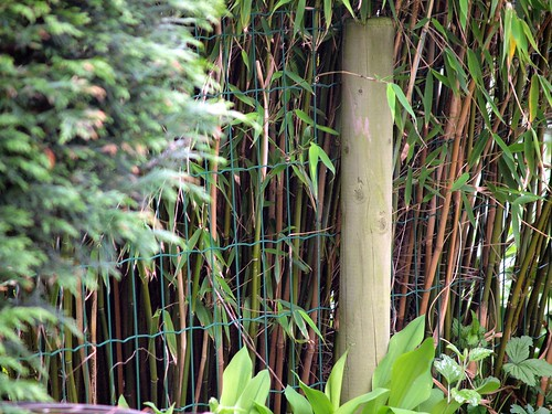 bamboo stems | by zoetnet