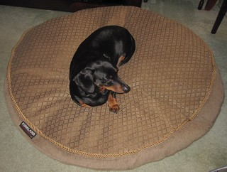 Costco Dog Bed That Is Larg And Gray
