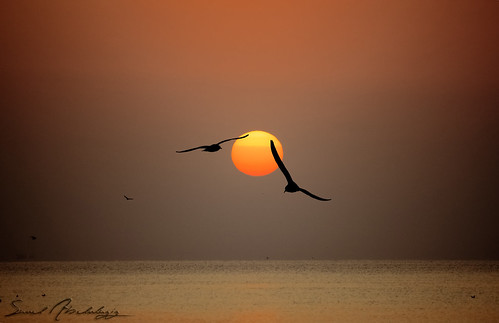 SunRise || with birds  [EXPLORED] | by سعود العقيل || saud alageel