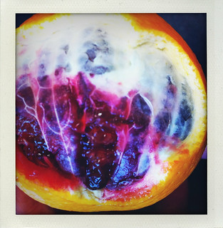 blood orange | by maurgor