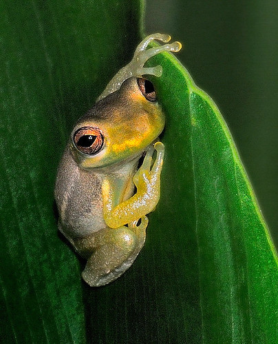 Frog | by Rick-0724