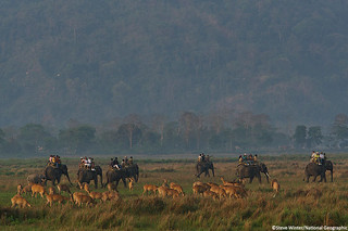 Tourists roaming through Kaziranga National Park | by Panthera Cats
