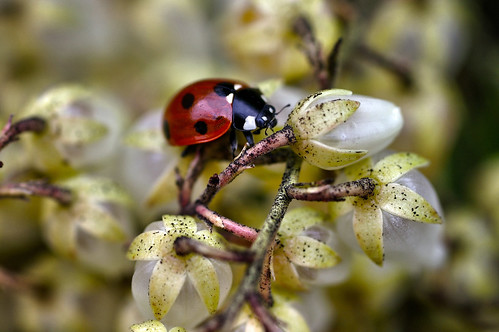 The First Spring Lady Bug | by digirose