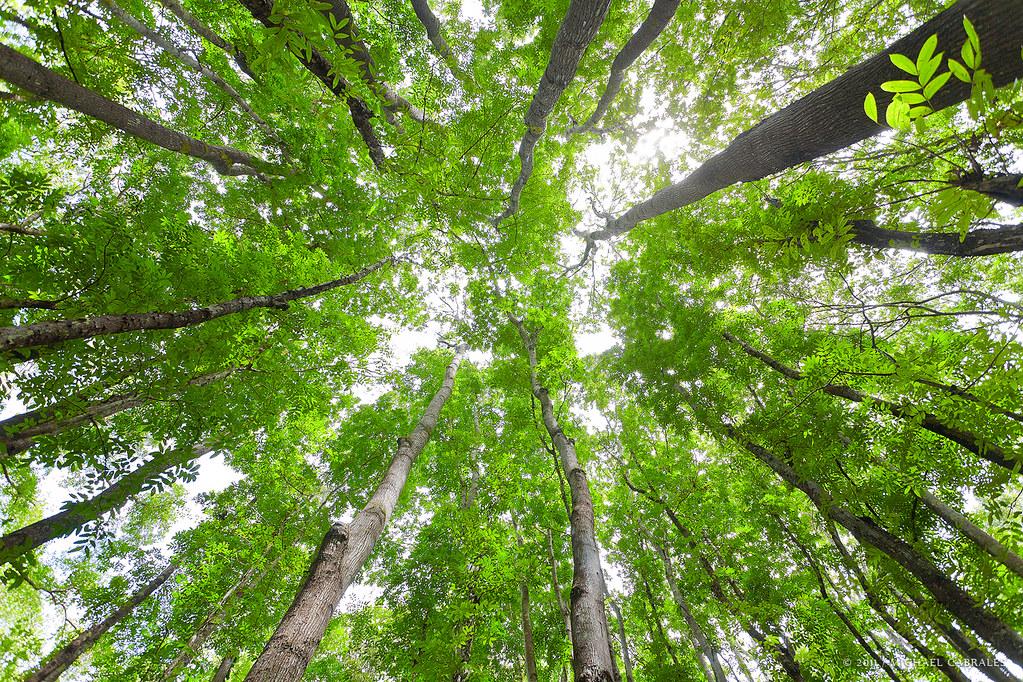 bohol forest oculam aumentado ubay mabini alicia