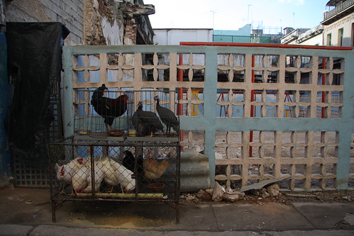 La habana Vieja... chicken at the open air | by ELI @ BrASiL