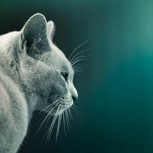 animal | by ►CubaGallery