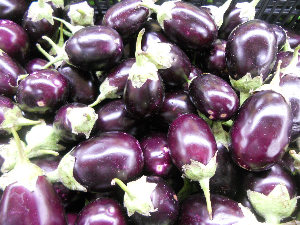 Image result for indian eggplant