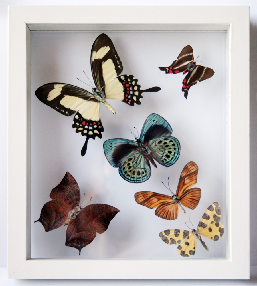 Real Butterfly Art with 6 Framed butterflies in White | Flickr