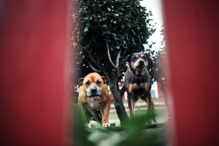neighborhood dogs on their perch. | by scotteverett