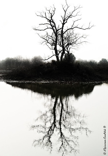 The Tree | by epicurean_camadik_69