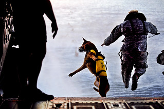 Fearless canine | by The U.S. Army
