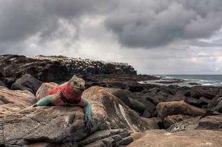 Galapagos | by www.luceartfoto.dk
