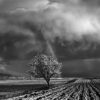 One Almond Tree Under the Storm | by DavidFrutos
