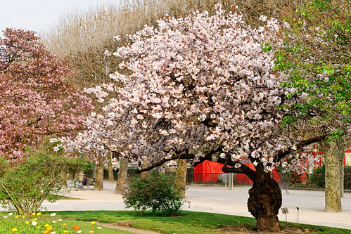 Cerisier du jardin des plantes marie lan nguyen flickr for Animalerie du jardin des plantes