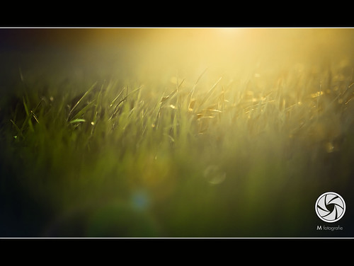 Field Of Gold --Explored!! | by M Fotografie
