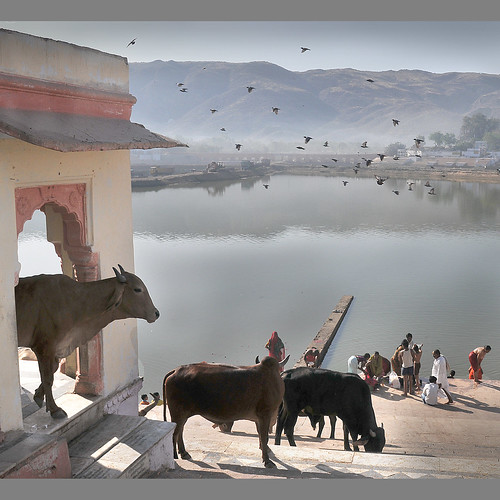 Early Morning in Pushkar | by Rosário Marques