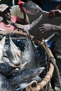 African Voices: Tunas in Dakar | by Greenpeace UK