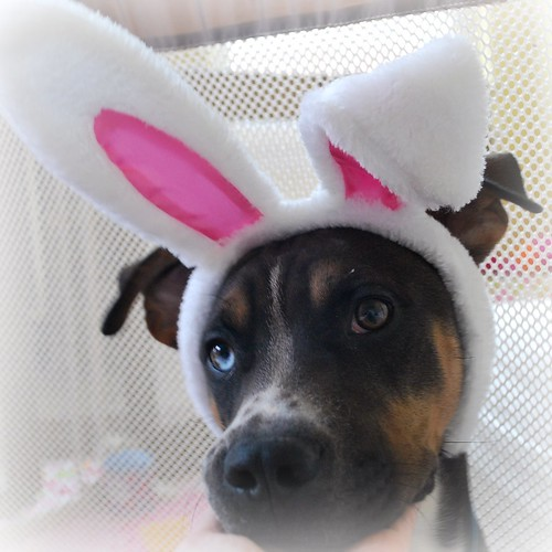 Back up Easter model