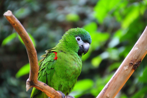 Green Parrot | by TheVancouverGuy