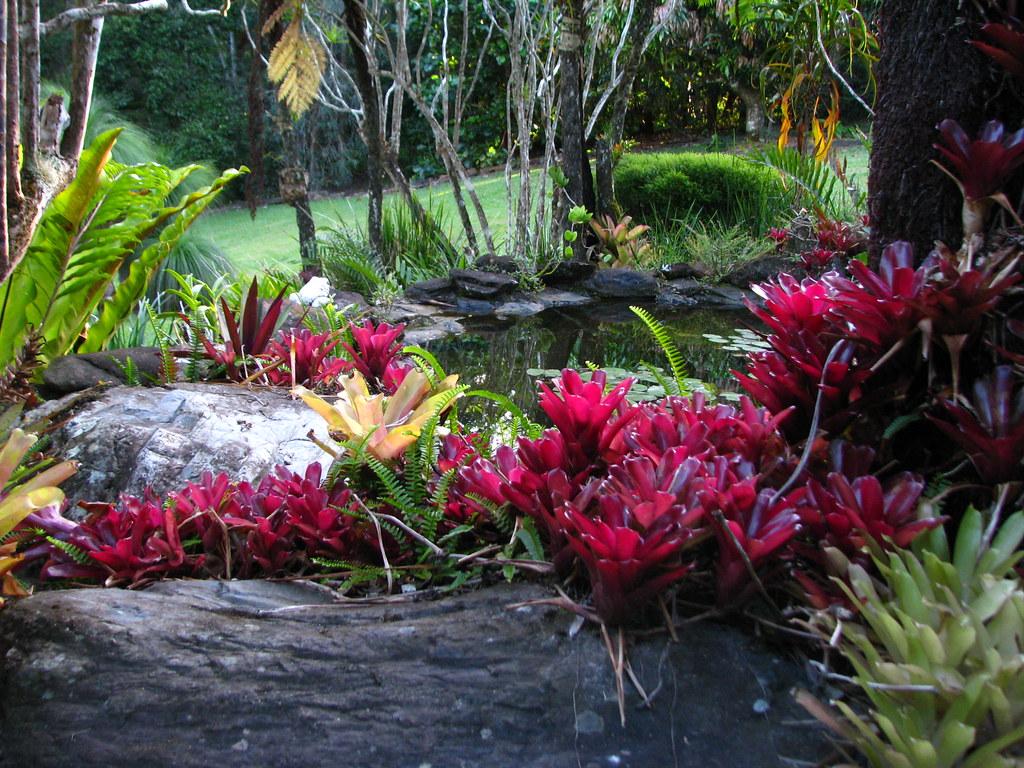 ... Private garden in Kuranda   by tanetahi
