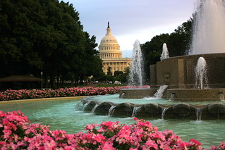 Capitol, Fountain, and Flowers at Magic Hour - Washington DC | by ChrisGoldNY