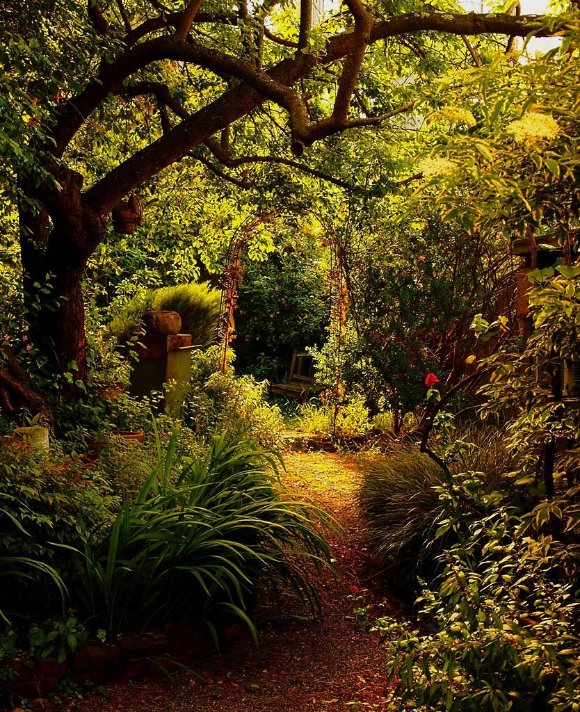 enchanted garden by darwin bell enchanted garden by darwin bell - Enchanted Garden