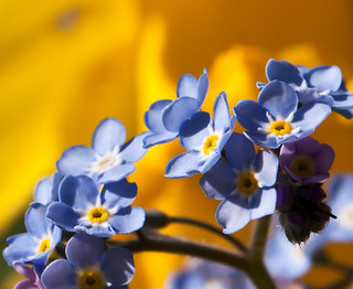 Blue and yellow | by Steve-h