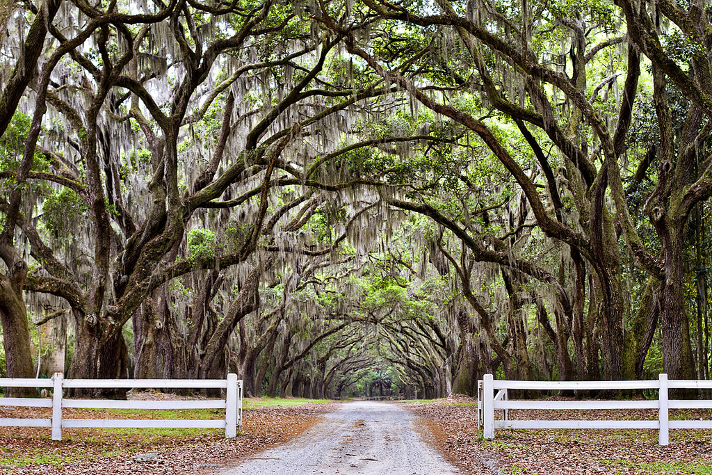 wormsloe plantation coolest driveway in the world spani flickr