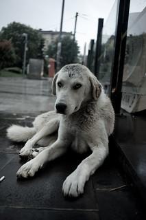 Dog Food Poison
