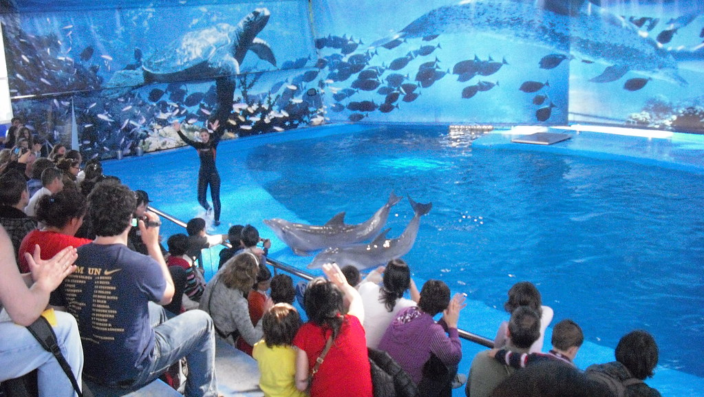 Dolphin Show At The Barcelona Zoo Oh Barcelona Com Flickr