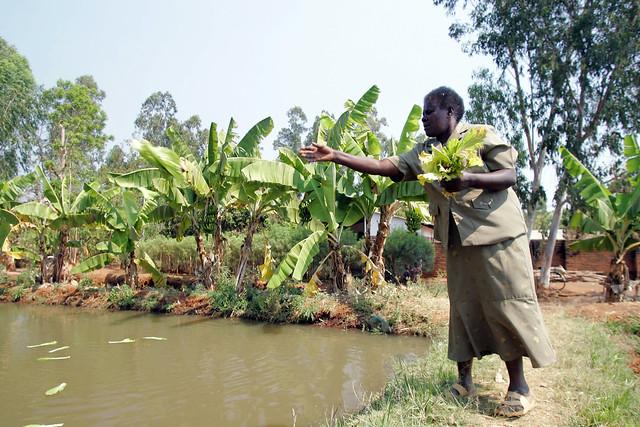 Malawi, nr Zomba, Chiunda village
