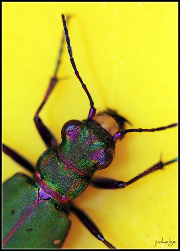 Green bug in yellow bucket | by jimhelge