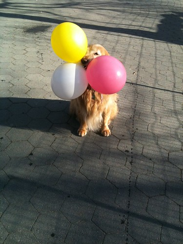 Dogs Balloons Video
