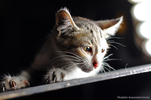 The Lost Kitten !!! | by Prabhu Ramakrishnan