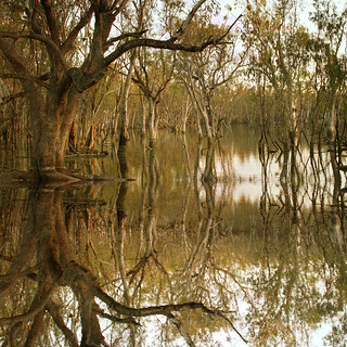 Floodlands - Goondawindi | by FrAcTuReD...fOtOs