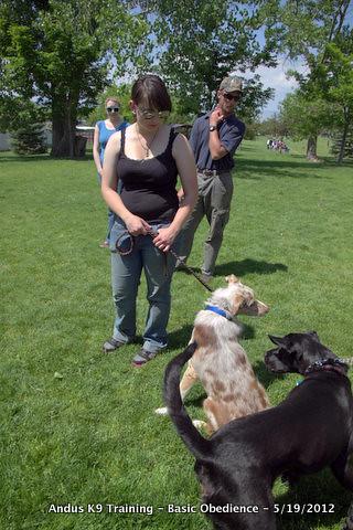 Dog Training Lake Charles La