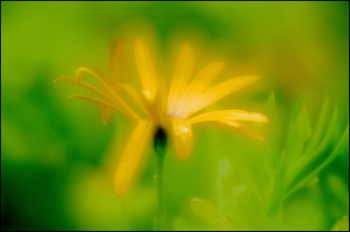 abstractyellowflowercolor | by davedawsonfbks