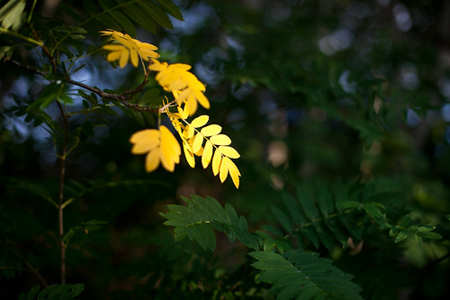 Some Yellow | by Pierre Pocs