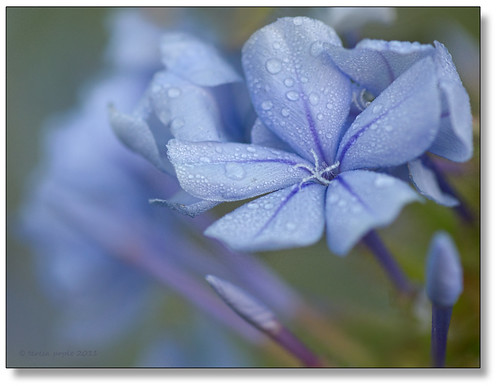 beautifully blue | by Teresa Pople Photography