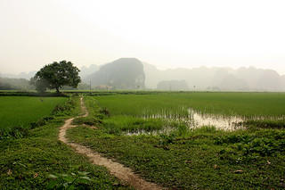 PADDY FIELDS IN TAM COC | by Iván Latour